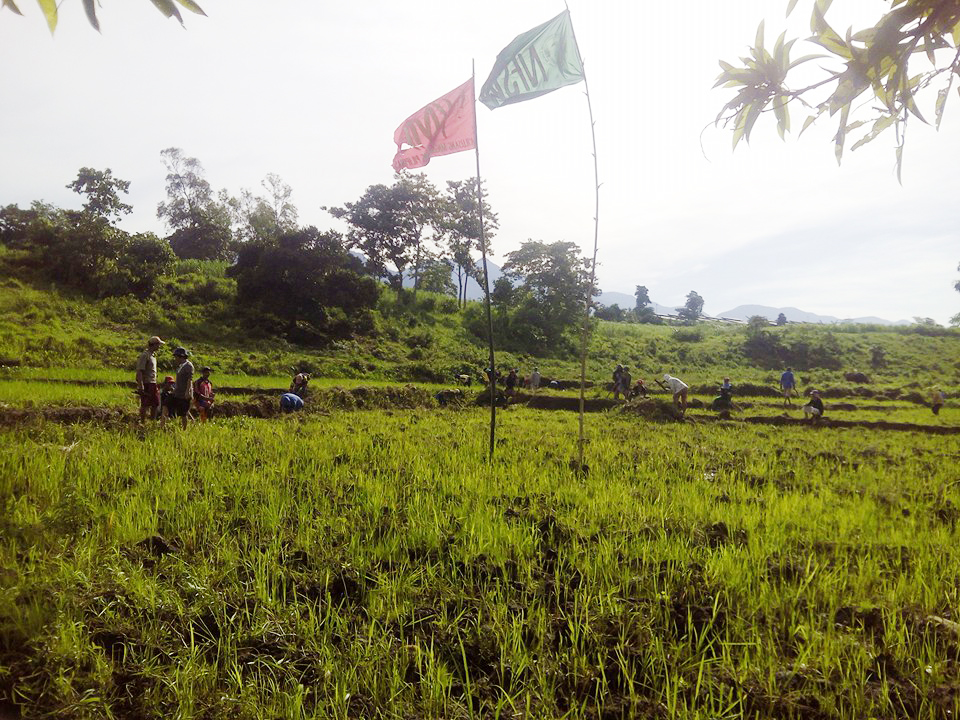 After the favorable DAR ruling in May 2016, former sugar workers of Hacienda Ilimnan decided to cultivate the land. Photo by National Federation of Sugar Workers.